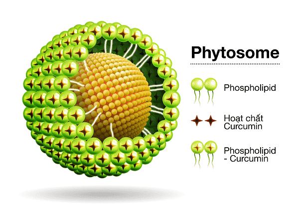 Công nghệ Phytosom Curcumin